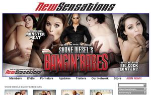 Shane Diesel`s Bangin Babes